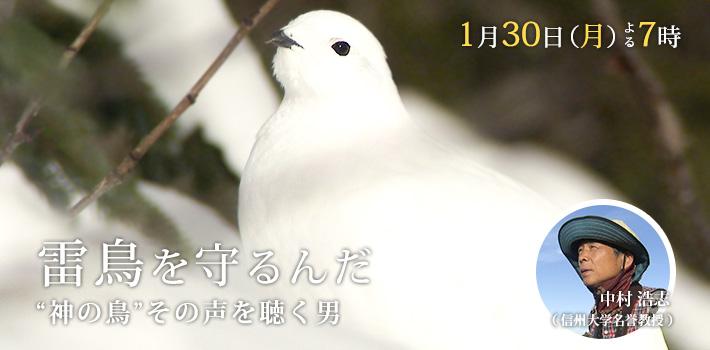 """雷鳥を守るんだ """"神の鳥""""その声を聴く男"""