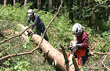 地球を守ろう!プロジェクト 森林を育て、森林と生きる!