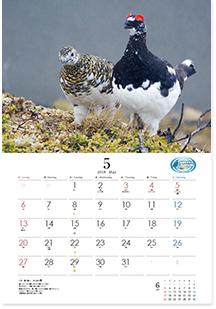 カレンダー「雷鳥の四季 2018」5月