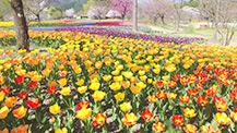 シリーズ信州の美 春の花