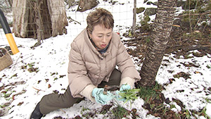 主役は麗子!信州大好きクッキンングSP~春に食べたい旬の食材を求めて~(駅テレ)