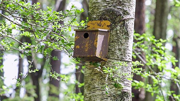 もっと!信州77「岡谷市編」| 塩嶺小鳥の森自然公園