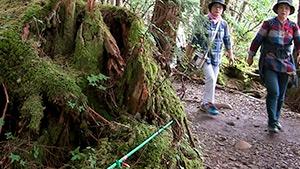 もっと!信州77「小海町編」| 苔の原生林