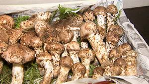 もっと!信州77「豊丘村編」| 松茸は生産量・品質全国トップクラス