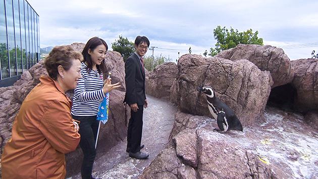 麗子センセーと行く!夏の日本海ツアー(駅テレ)