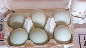 もっと!信州77「木島平村編」| 青い殻の卵(アローカナ)
