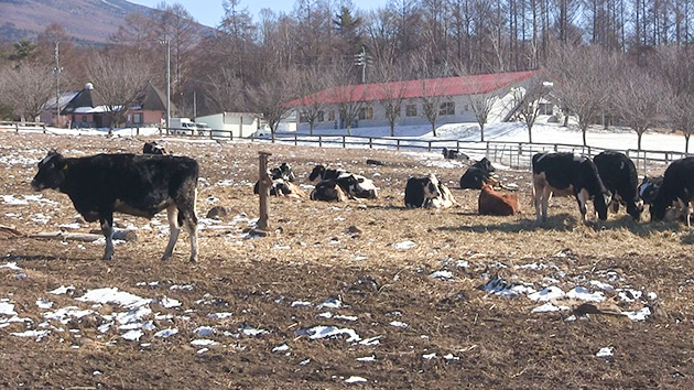 もっと!信州77「木島平村編」| 牛の放牧