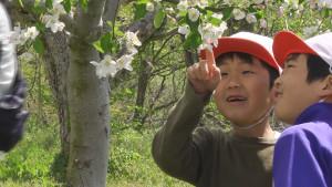 りんごを育てる課外授業