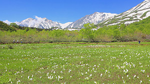 もっと!信州77「小谷村編」 雪解けの栂池自然園