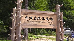 もっと!信州77「上松町編」|赤沢自然休養林
