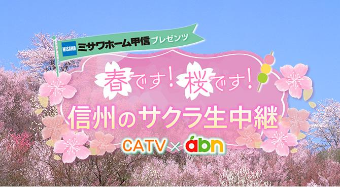 春です!桜です!信州のサクラ生中継(abn×CATV)
