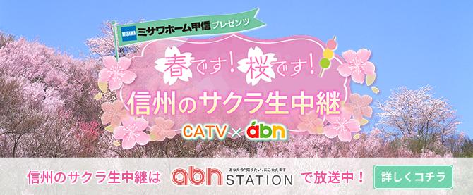 春です!桜です!信州のサクラ生中継