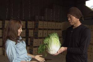 第9回【食材】ハクサイ
