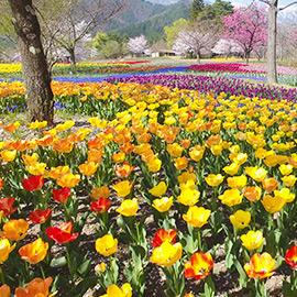 シリーズ信州の美 春の花(5月26日 日曜 午後1時55分)